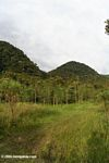 Reforestation project in Colombia