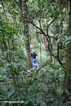 Rainforest canopy 'adventure'