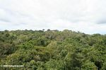 Amazon rainforest canopy [co04-1016]