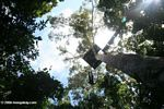 Platform in the rainforest canopy