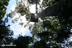 Canopy platform in the Amazon rainforest