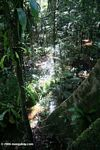 Flooded Amazon swamp forest
