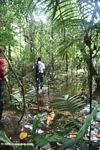 Slogging through the flooded Amazon swamp forest