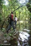 Hiking in the flooded Amazon swamp forest