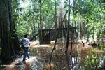 Platform in the flooded swamp forest