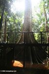 Canopy access platform in the flooded swamp forest of the Colombian Amazon