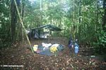 Amazon rainforest camp site set up, with tarp