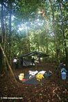 Amazon rainforest camp site set up, with tarp [co05-0742]