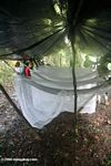 Hammocks and mosquito nets at Amazon camp site