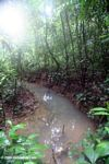 Small forest creek in the Colombian Amazon