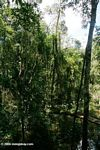 Flooded forest in the Colombian Amazon