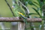 Green parrot [co07-0506]