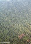Aerial view of likely indigenous forest clearing in the Amazon rainforest of Colombia