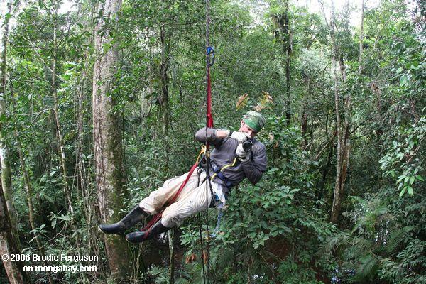Ascending to the canopy in Colombia & What is the canopy?