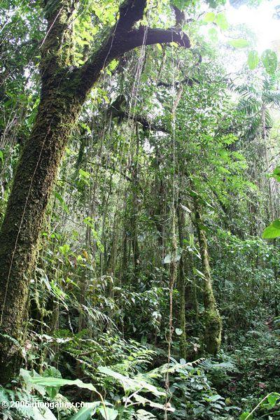 Cloud forest in Colombia. Photo by: Rhett A. Butler.