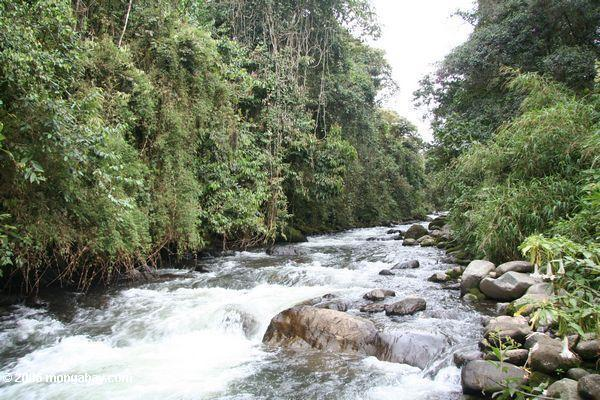 Cloud forests, such as this one in Colombia, may be hugely impacted by global warming as species attempt to migrate upslope to maintain their temperature preferences. The world's cloud forests are some of the most biodiverse ecosystems in the world, and home to innumerable species found no-where else. Photo by: Rhett A. Butler.