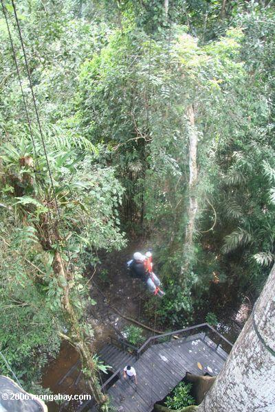 Ascending to the canopy