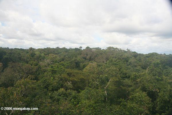 Amazonas rainforest überdachung