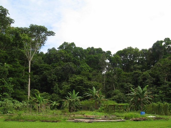 Garden and forest at Iwokrama