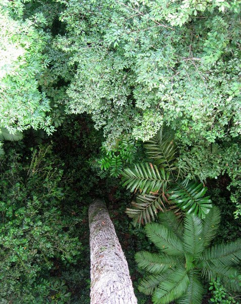 & Forest floor from canopy walkway