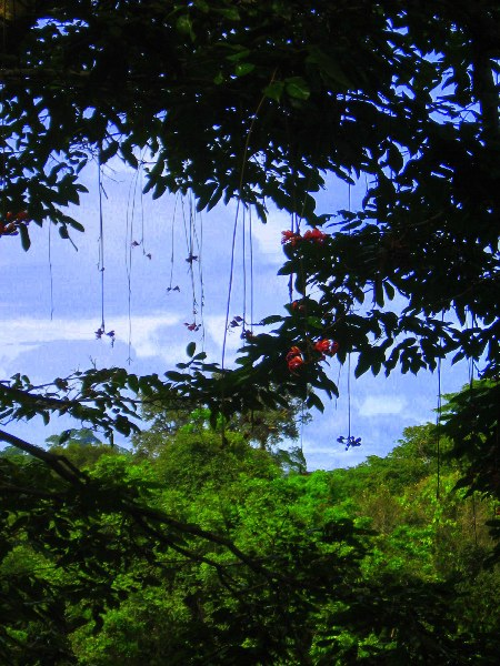 View of canopy from walkway