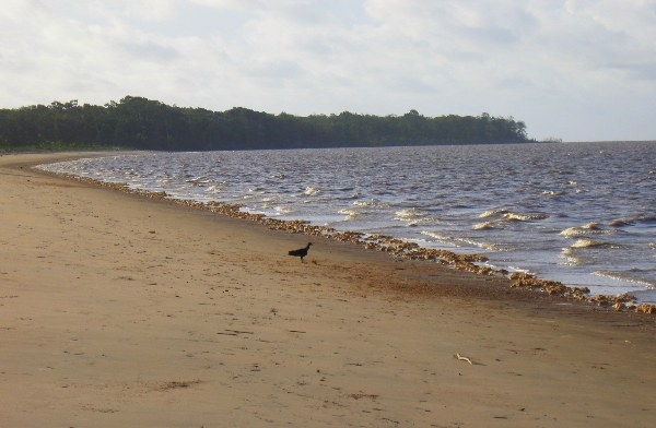 The beach and a black vulture