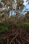 Forest damaged by palm oil orphaned orangutans
