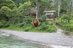Female orangutan crossing over the Bohorok river using a wire near the entrance of Gunung Leuser