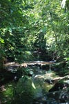 Rainforest creek in Gunung Leuser national park