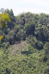 Fresh deforestation near Gunung Leuser national park