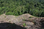 New oil palm development in forest next to Gunung Leuser National Park