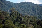 Gunung Leuser Rainforest