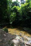 Rainforest creek in Gunung Leuser