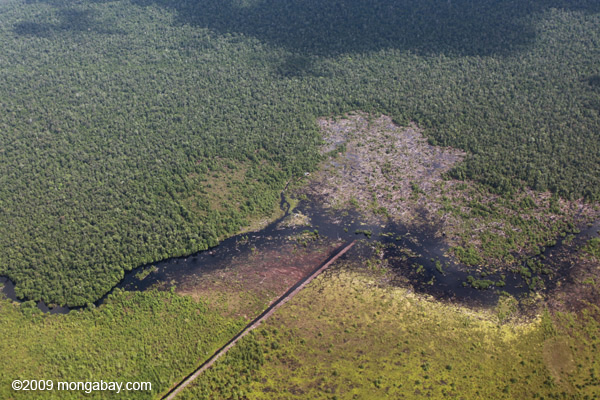 Photo: Peat forest in Borneo being drained for oil palm plantations