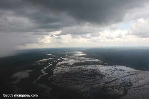 The vast peatlands of Borneo are being destroyed at record rates. Photo by: Rhett A. Butler.