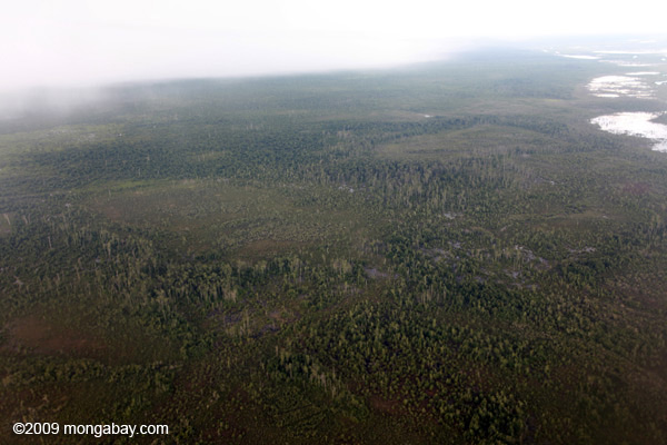 Degraded forest and peatlands in Central Kalimantan. Photo: Rhett A. Butler