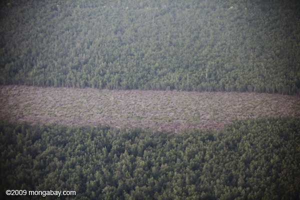 A logged-out forest in Indonesia's Central Kalimantan province. Photo: Rhett A. Butler