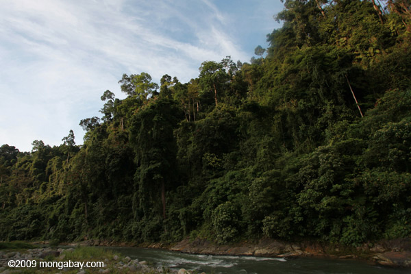 Rain forest along the Bohorok River, Sumatra