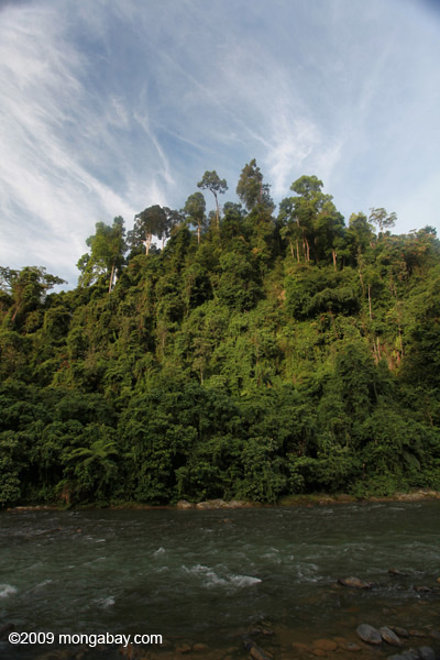 Rain forest along the Bohorok River
