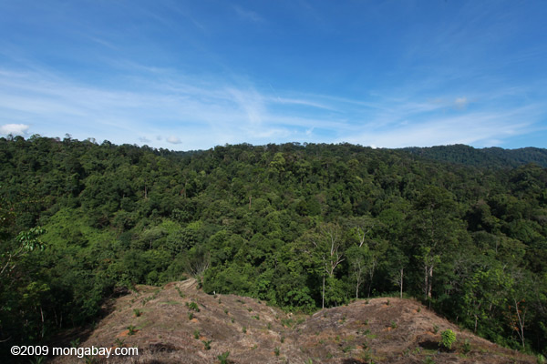New oil palm development in forest bordering Gunung Leuser National Park