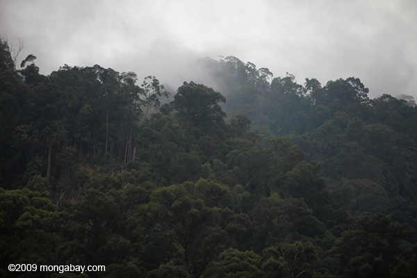 Small-scale forest clearing in Mount Leuser National Park. Photo: Rhett A. Butler