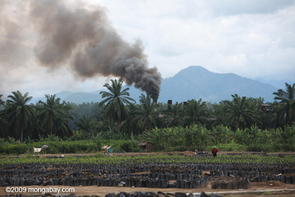 Oil palm nursery and processing facility in Sumatra. According to Foley: 'Organic farmers farm, while industrial farmers mine.' The paper argues a mix of both may be needed to feed the world. Photo by: Rhett A. Butler.
