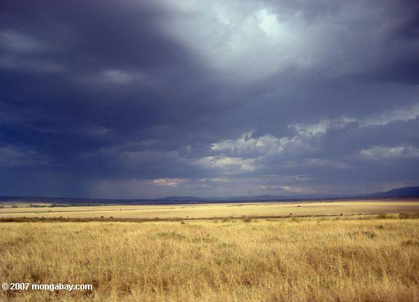 Grasslands in Kenya's Masai Mara. Photo by: Rhett A. Butler.