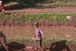 Man plowing a rice paddy