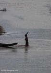 Boys playing in the Nam Tha River