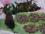 Songbirds and pollywogs in the Luang Prabang morning market
