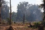 Charred and still smoldering forest in Laos