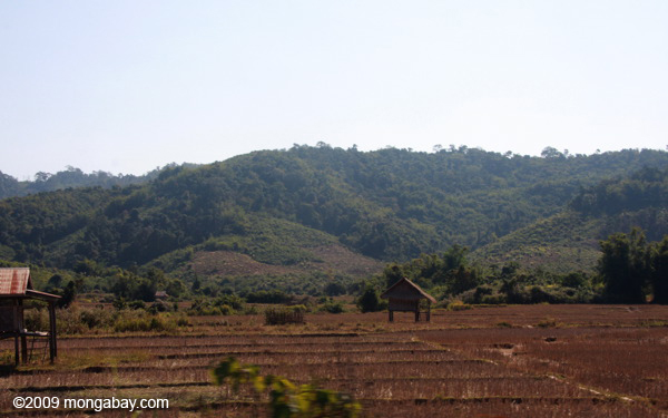 Dry rice fields in Bokeo District