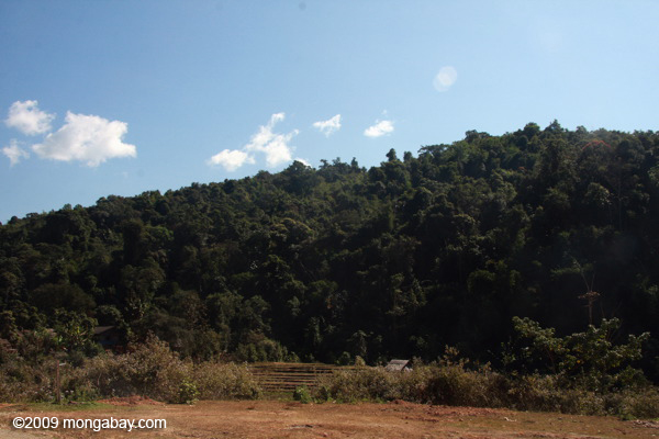Tropical forest in Lao PDR