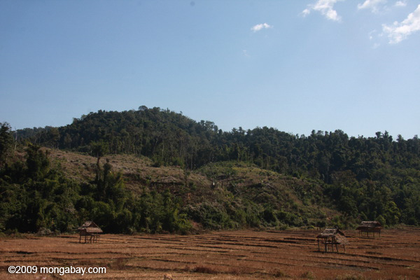 Deforestation and rice fields